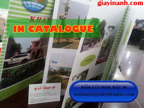 In catalogue giá rẻ Bình Thạnh tại Công ty TNHH In Kỹ Thuật Số - Digital Printing